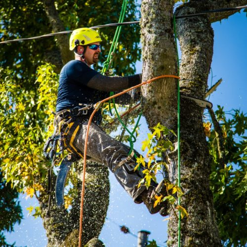 Tree Maintenance and Removal